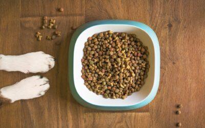 Derfor er din hunds hundefoder så vigtigt